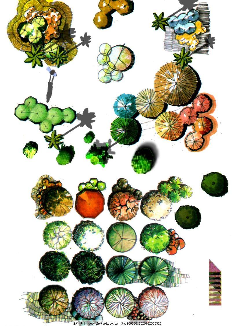 彩色平面手绘园林植物图片