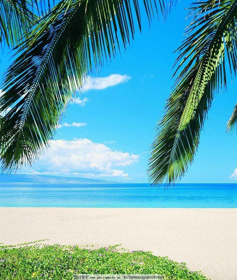 海边 大海 沙滩 椰子树 自然景观 自然风景 摄影图库