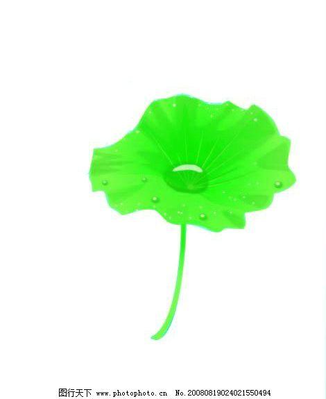 一片绿叶图片