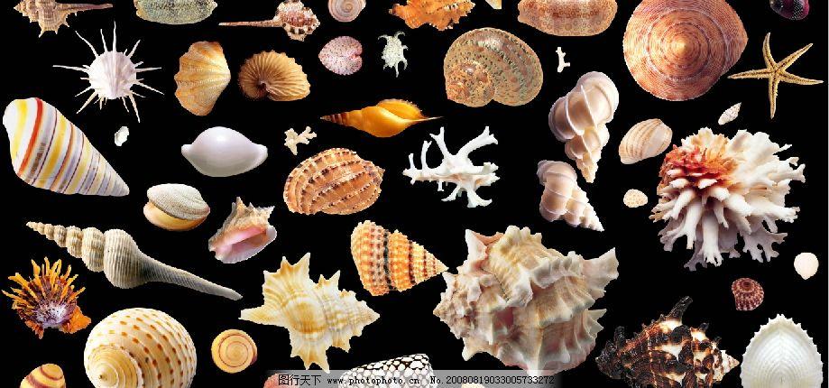 海滩贝壳类图片