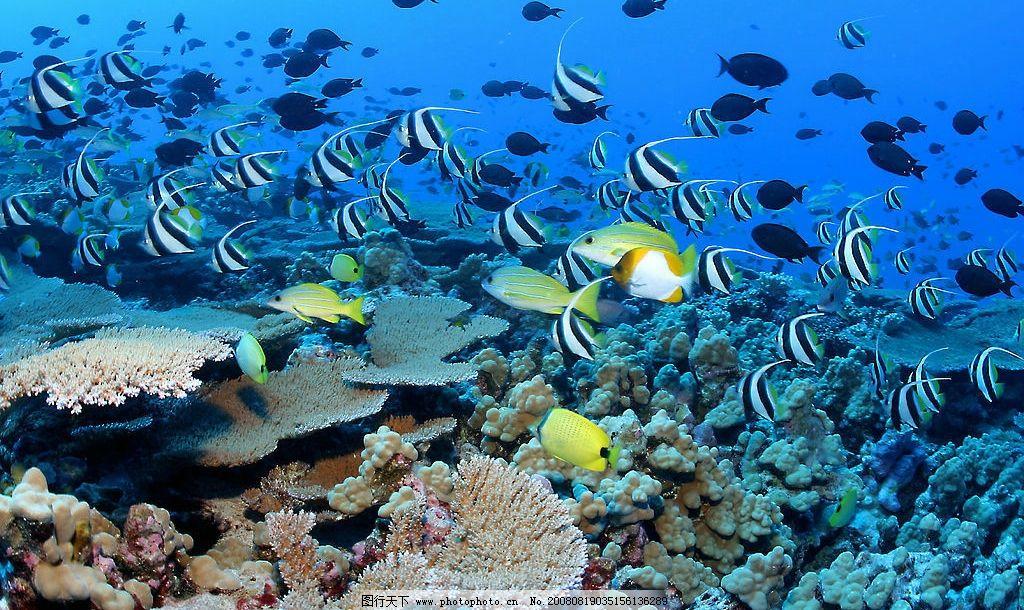 海底世界 蓝海 鱼 生物世界 海洋生物 摄影图库 72dpi jpg
