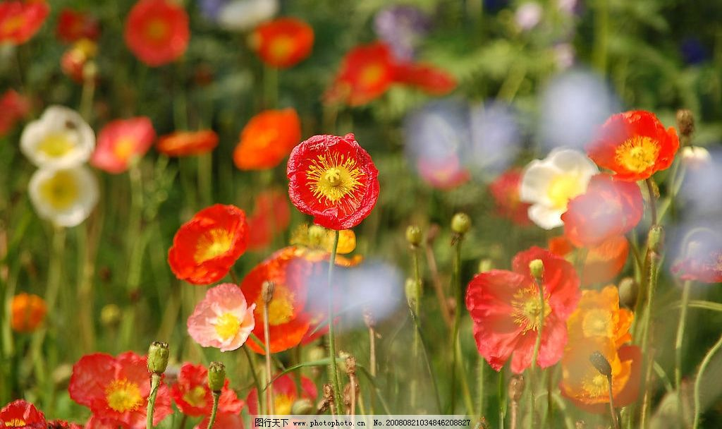 五彩斑斓的花 红花 绿叶 自然景观 自然风光 植物园 自然风景 植物园