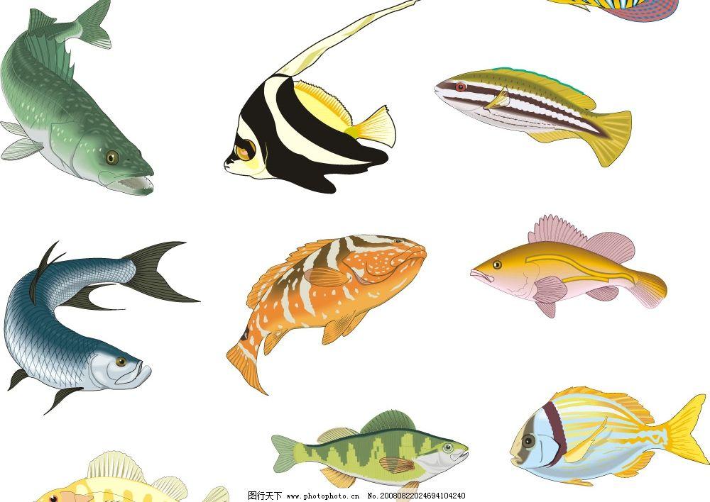 设计图库 生物世界 鱼类    上传: 2008-8-22 大小: 3.