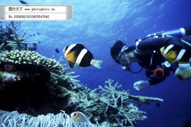 海底世界 生物 珊瑚 鱼群 潜水员 探秘 礁石 安静 海胆 水母 鱼 海星