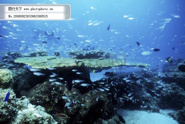 深海 海底世界 生物 珊瑚 鱼群 潜水员 探秘 礁石 安静 海胆 水母 鱼
