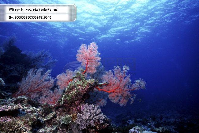 其他 其他图片素材  深海免费下载 安静 海胆 海底世界 海星 礁石