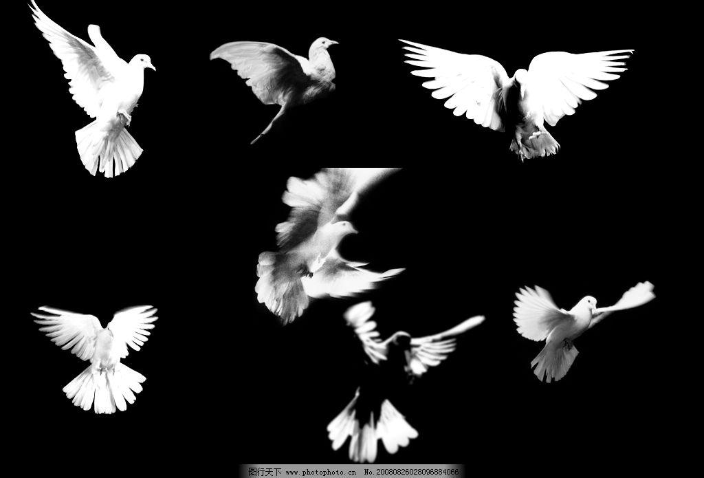 7种飞翔的白鸽笔刷