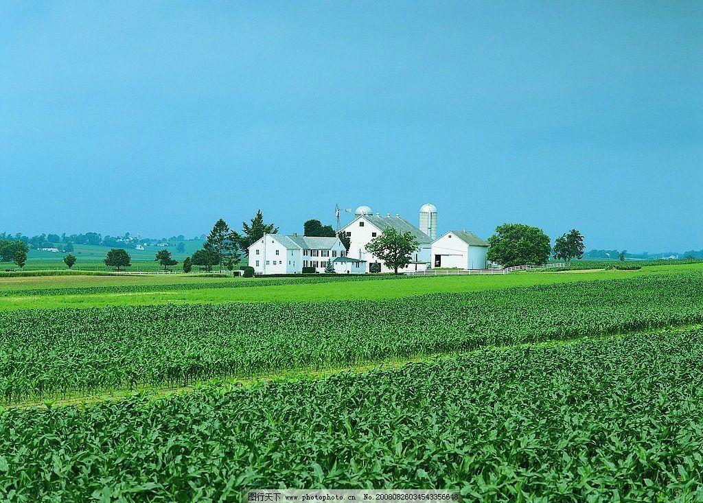 绿色田园 庄稼 房子 风景 摄影图库