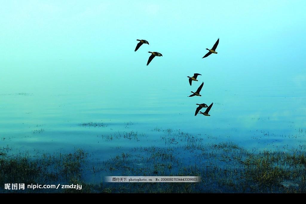 水 湖泊 宿鸭湖 鸟 飞鸟 自然景观 风景 水天一色 大雁 山水风景 摄影