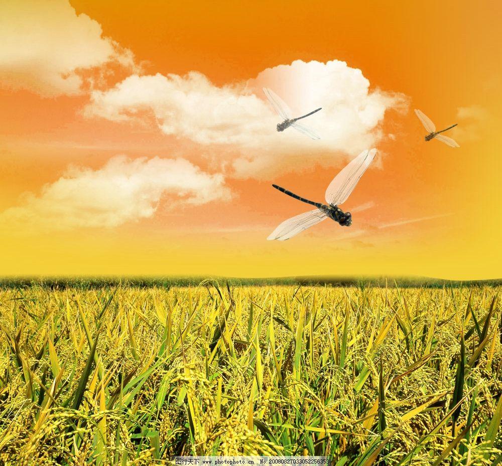 蜻蜒 时尚 风景 自然 清新 高像素 野外 蓝天 天空 白云 psd分层素材