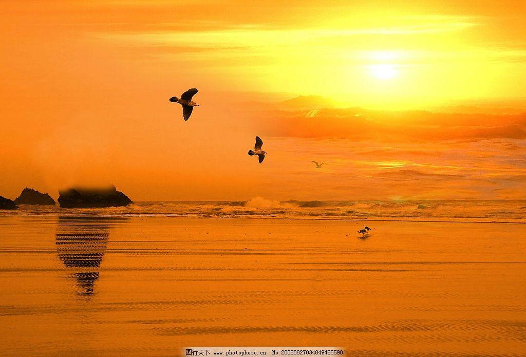 夕阳美景 湖鸟 海鸥 自然景观 自然风景 摄影图库