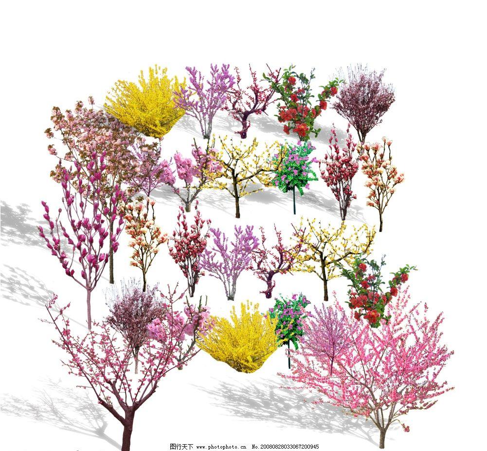 绿化图例 花灌木 紫玉兰 贴梗海棠 psd分层素材 源文件库 psd
