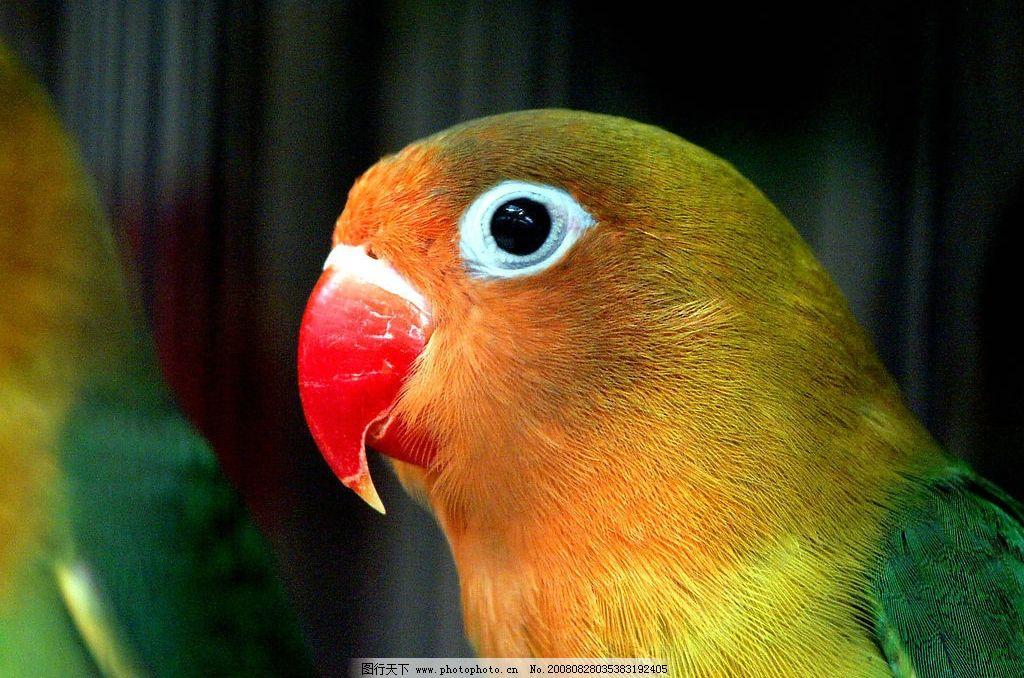 壁纸 动物 鸟 鹦鹉 1024_678