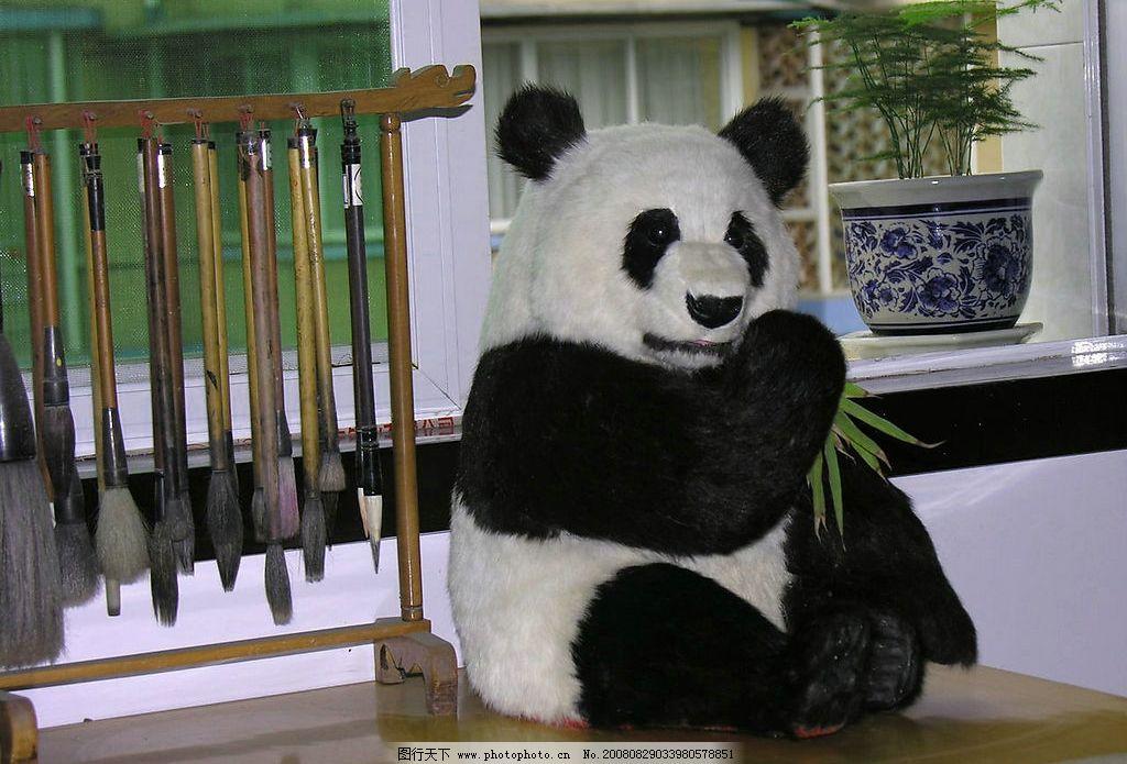大熊猫 熊猫 大熊猫培育基地 国宝 国家保护动物 竹子 生物世界 野生