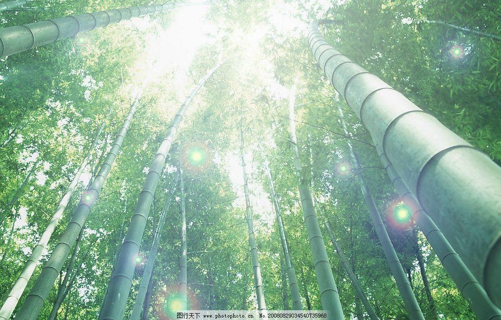 仰视 竹林 自然景观 田园风光 摄影图库 350dpi jpg 摄影