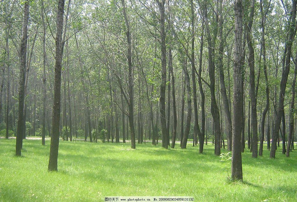 树林 自然景观 自然风景 花卉 摄影图库 180dpi jpg