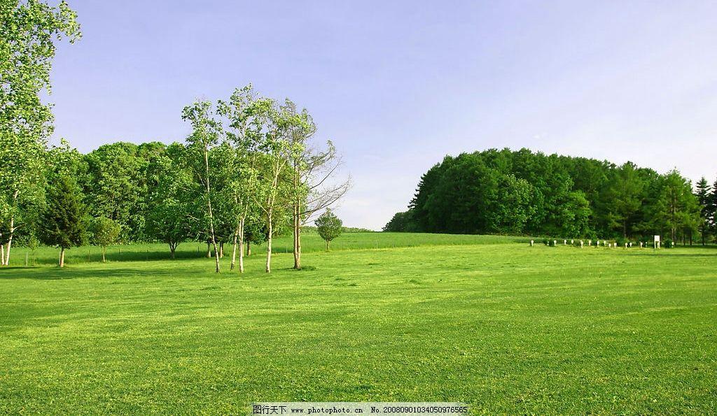 草地-树林 草地 绿地 草坪 树林 树丛 白桦树 绿色 天空 广阔 旅游