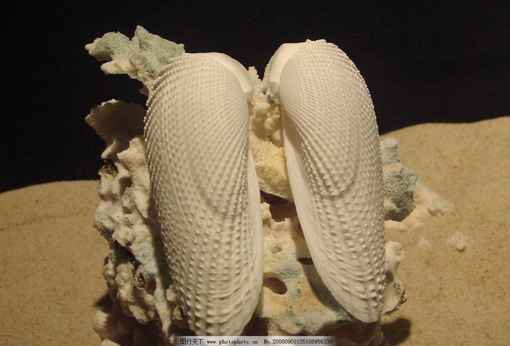海南贝壳 新奇 漂亮 生物世界 海洋生物 摄影图库 72dpi jpg