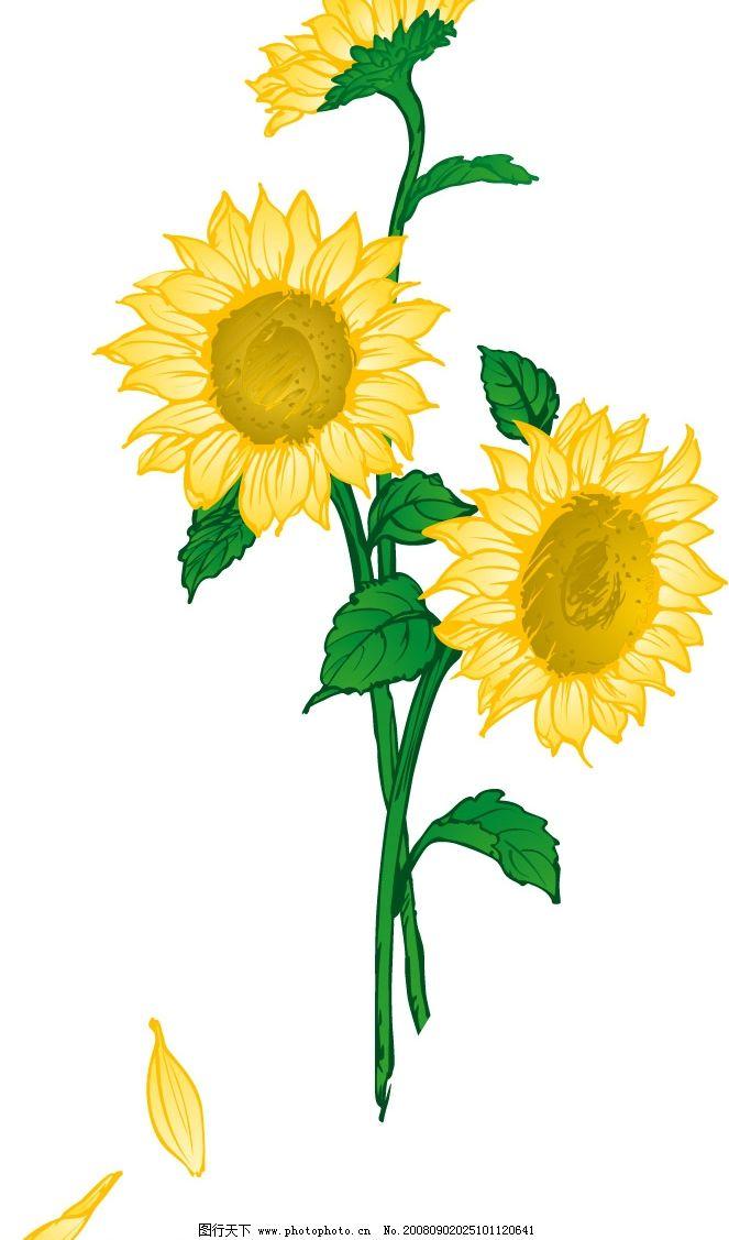 向日葵 花卉 植物 矢量图库