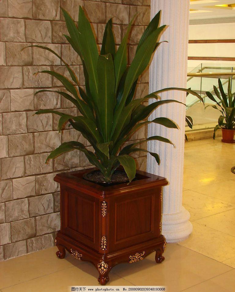 花盆和植物图片