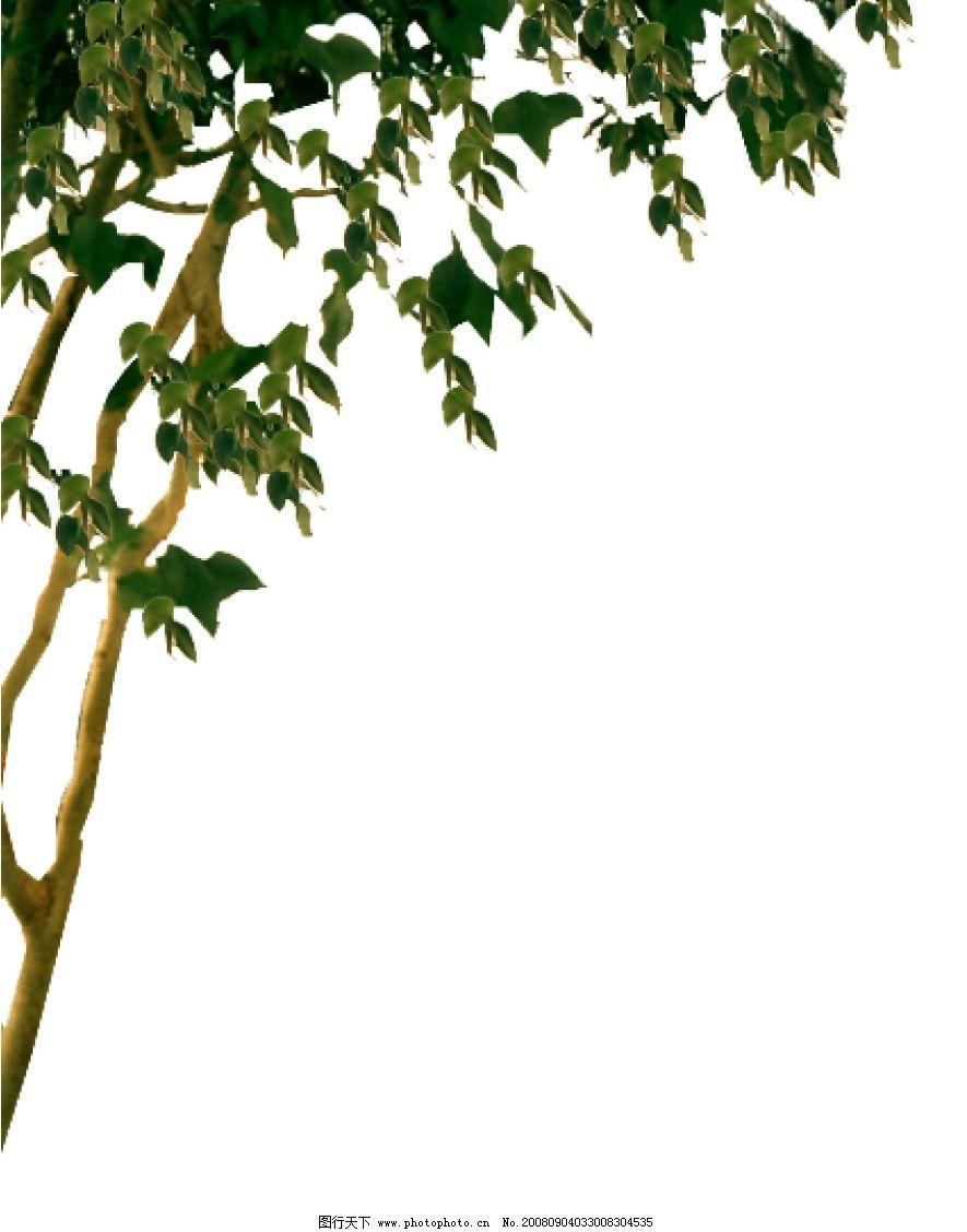 植物后期处理 绿色 树叶 黄色 树干 psd分层素材 源文件库 72dpi psd