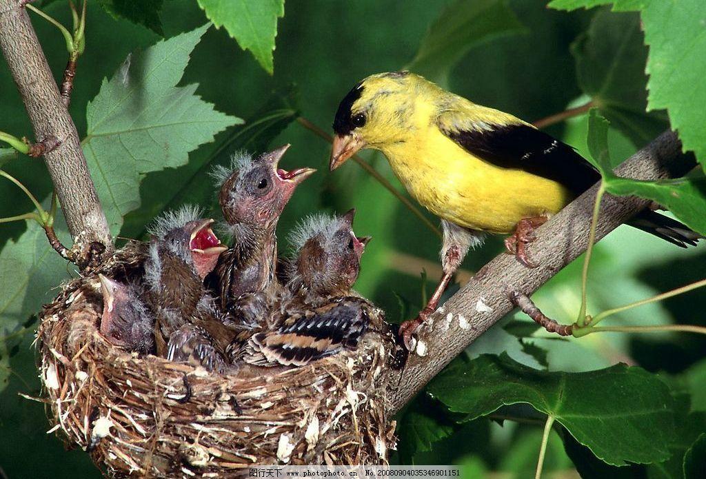 鸟巢 鸟窝 树枝 树杈 树叶 绿叶 大自然 新生命 生物世界 漂亮的动物
