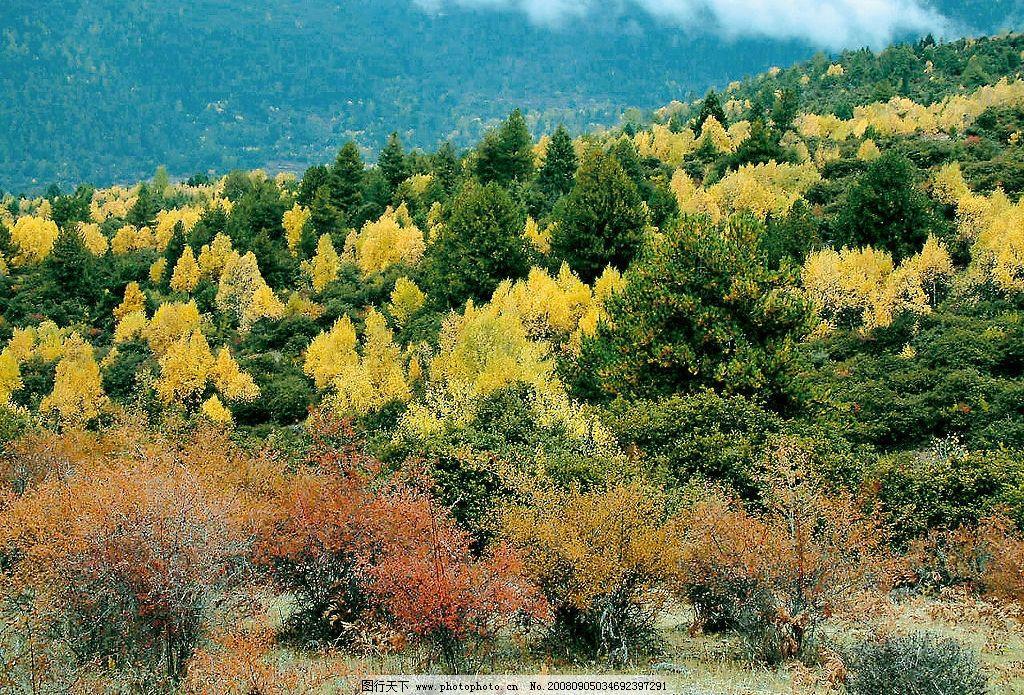 林芝秋色 西藏 山雾缭绕 林海 树 自然景观 风景名胜 西藏林芝地区