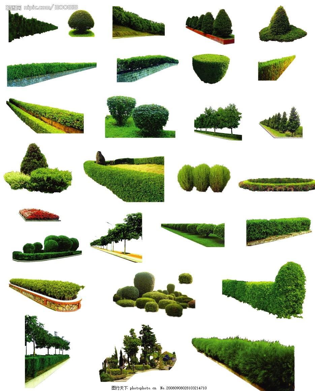 树木 灌木 花坛 树木 灌木 花坛 多棵及树群 环境设计 景观设计 源