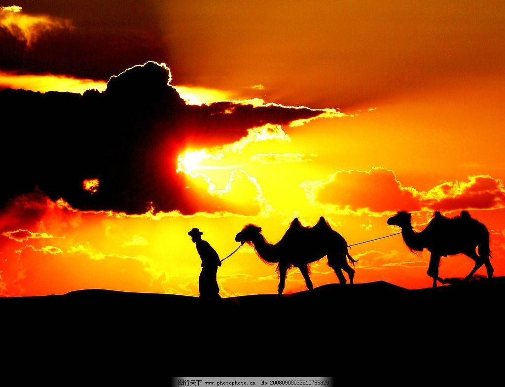 夕阳沙漠骆驼