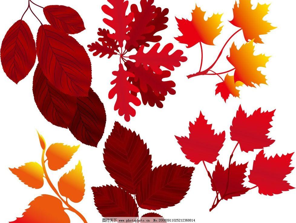秋天的树叶矢量素材图片