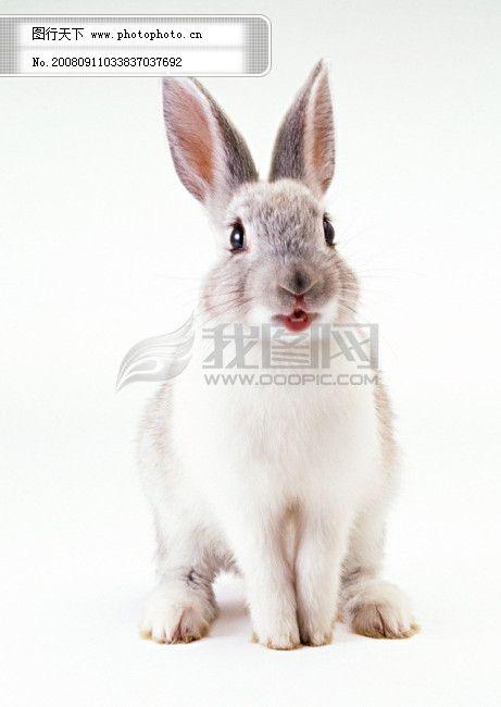 小动物免费下载 动物世界 可爱 兔子 小动物 小动物 动物世界 兔子