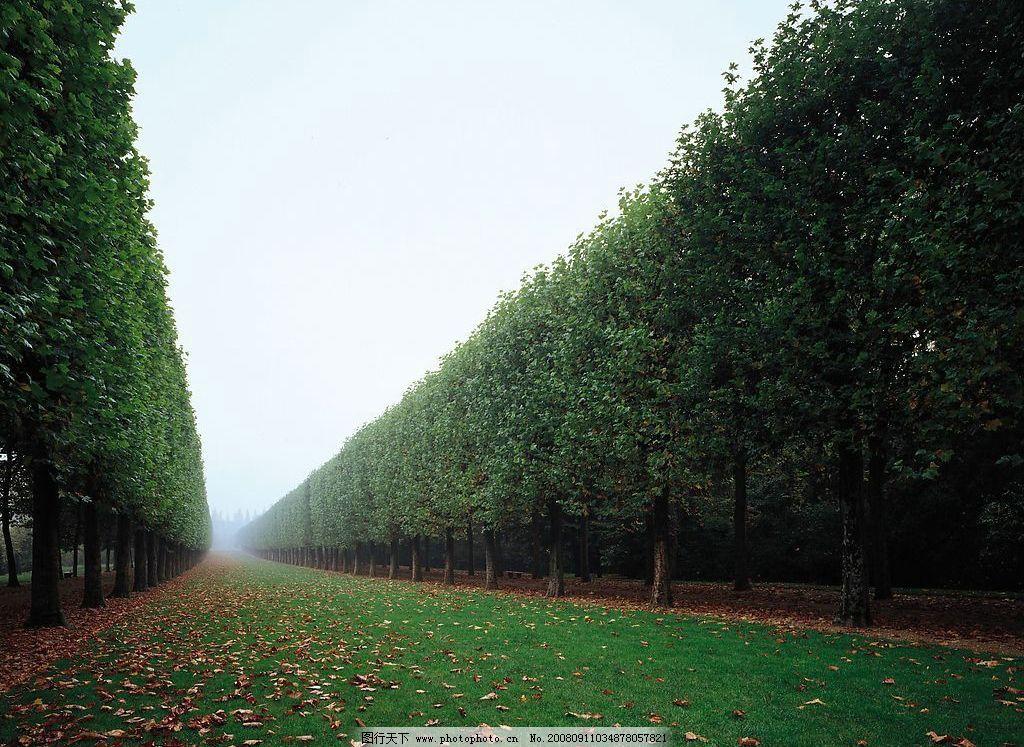 清晨树林 清晨 薄雾 树林 绿叶 草地 自然景观 自然风景 摄影图库 72