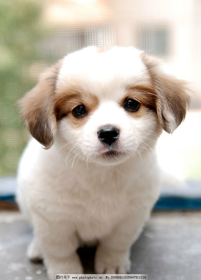 小狗 宠物 小动物 生物世界 家禽家畜 摄影图库 300dpi jpg