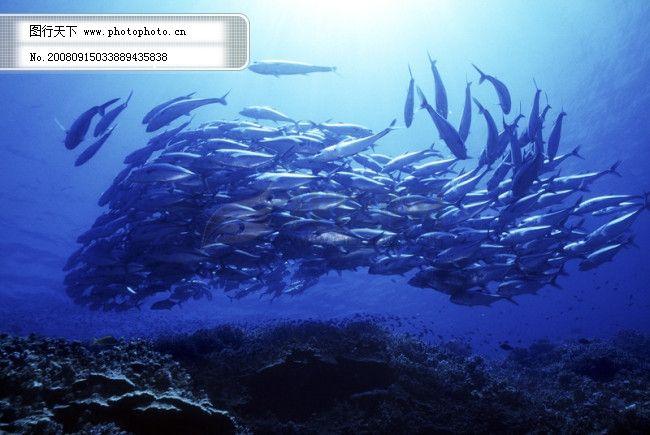 全球首席大百科 海底 探索 探秘 深海 珊瑚 潜水 潜水
