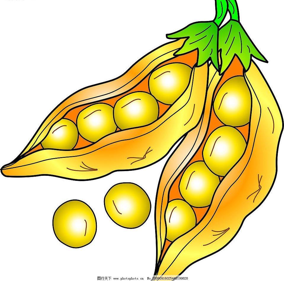 大豆 黄豆 矢量 矢量大豆 豆子 生活百科 矢量图库 黄金豆 其他生物