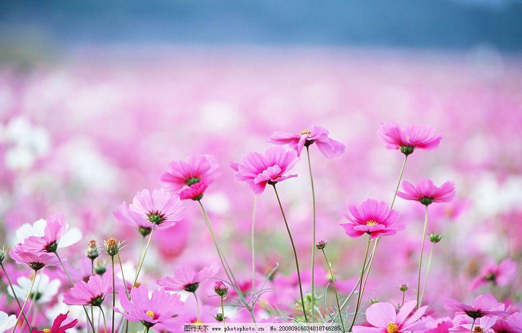 春天的花 春天 粉红色 花 白色 自然景观 自然风景 花开的季节 摄影