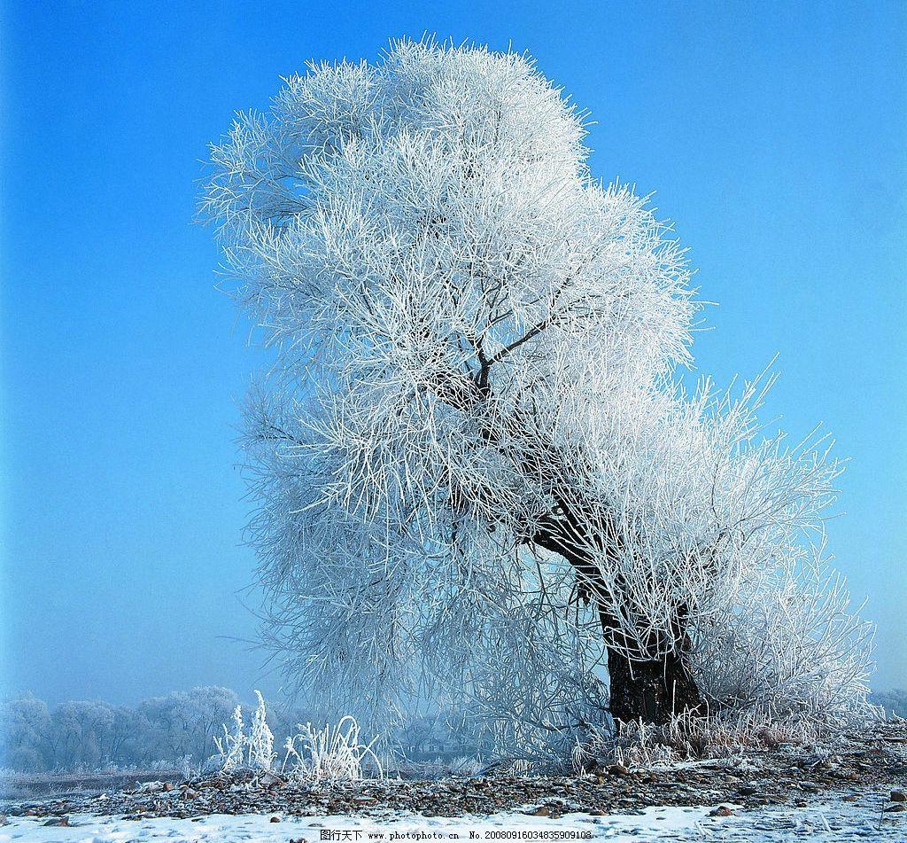 银装素裹 雪景 大雪 冬天 自然景观 北方风景 自然风景 摄影图库 72