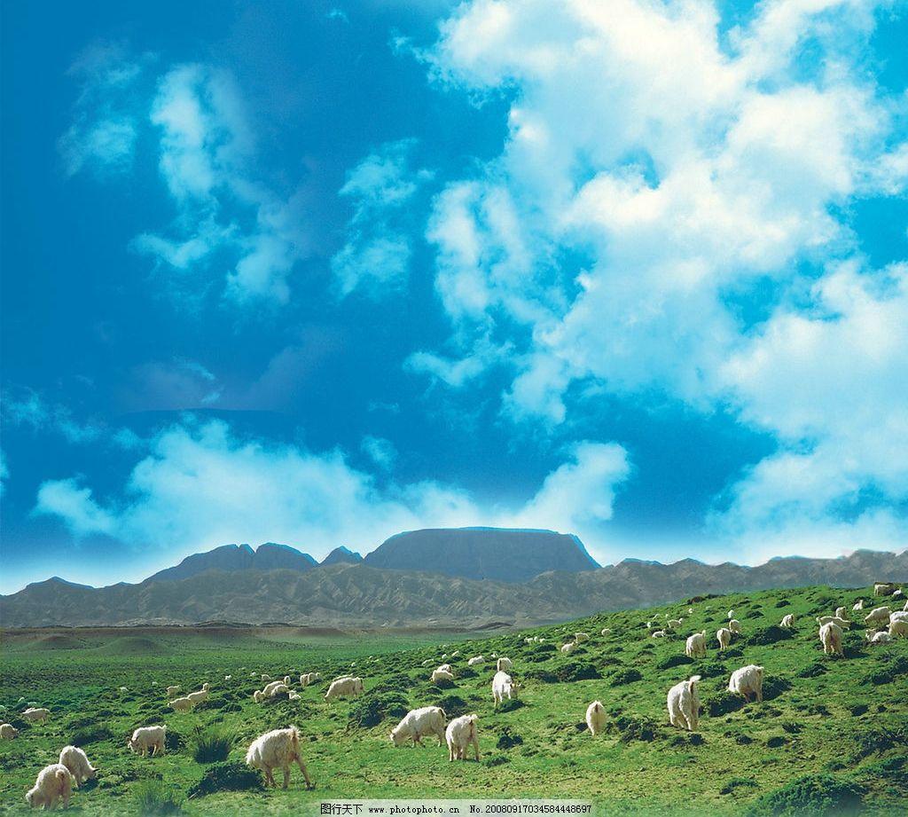 草原羊 自然景观 田园风光