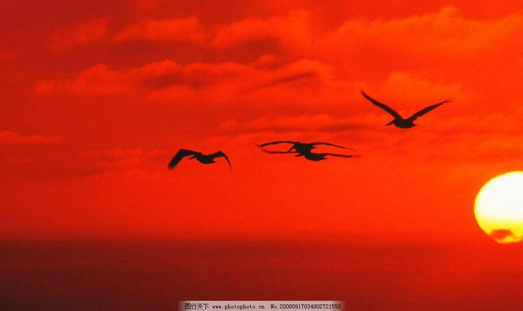 日出 大雁 早霞 红色日出 天空 自然景观 自然风景 风景图系列 摄影