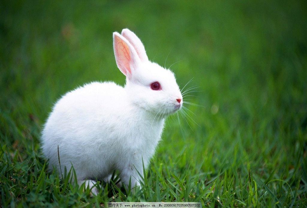 壁纸 动物 兔子 1024_695