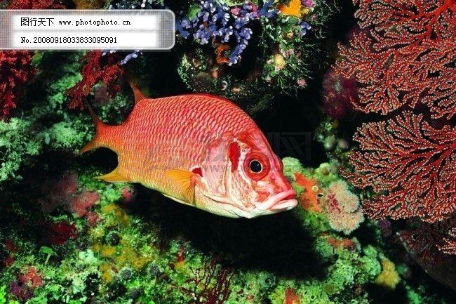 海底 大海 深海 碧海 海水 礁石 珊瑚 海藻 鱼群 生物 神秘 广告素材