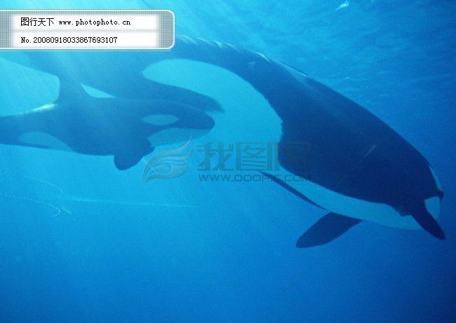 海洋 大海 碧海 海洋生物 鲸鱼 鲨鱼 海豚 广告素材大