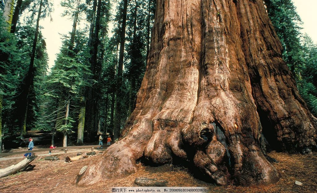 丛林之美 森林 大树 旅游 游客 参观 大树根 参天大树 庞然大物 丛木