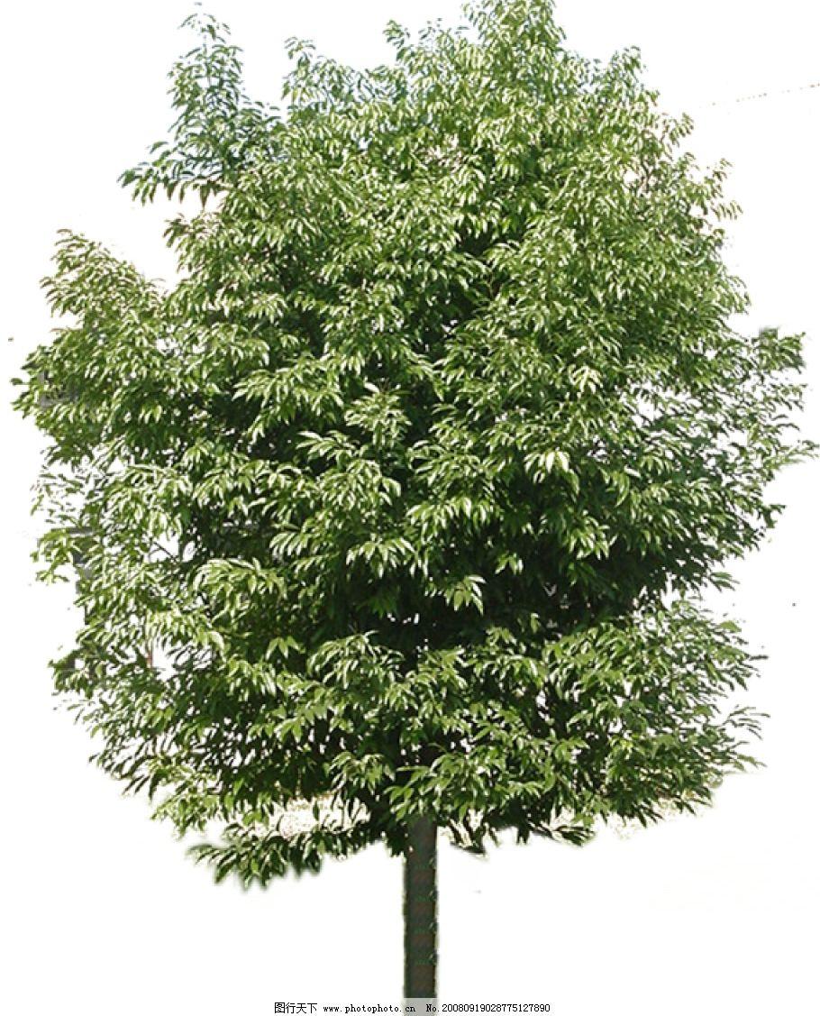 树木 树木分层素材 环境设计 园林设计 源文件库 72dpi psd