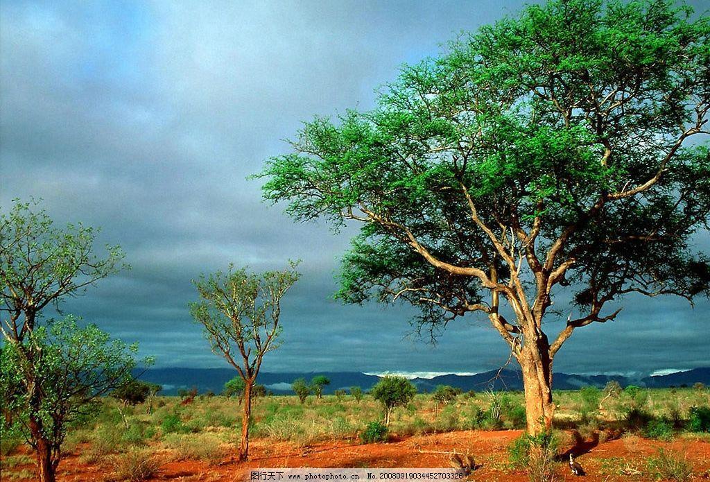空旷大树 大树 自然景观 山水风景 摄影图库 200dpi jpg