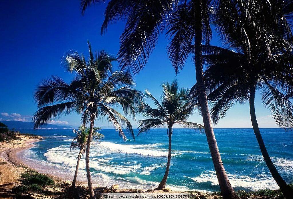 椰林海滩 椰林 海滩 蓝天 沙滩 自然景观 自然风景 摄影图库 72dpi