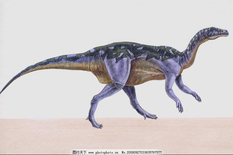 恐龙插画0084 装饰小品