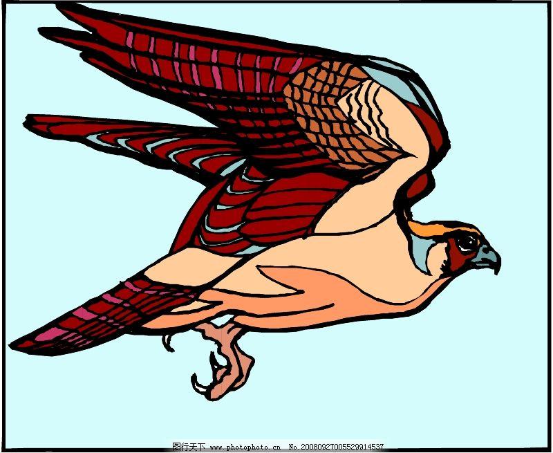 鸟类动物0353