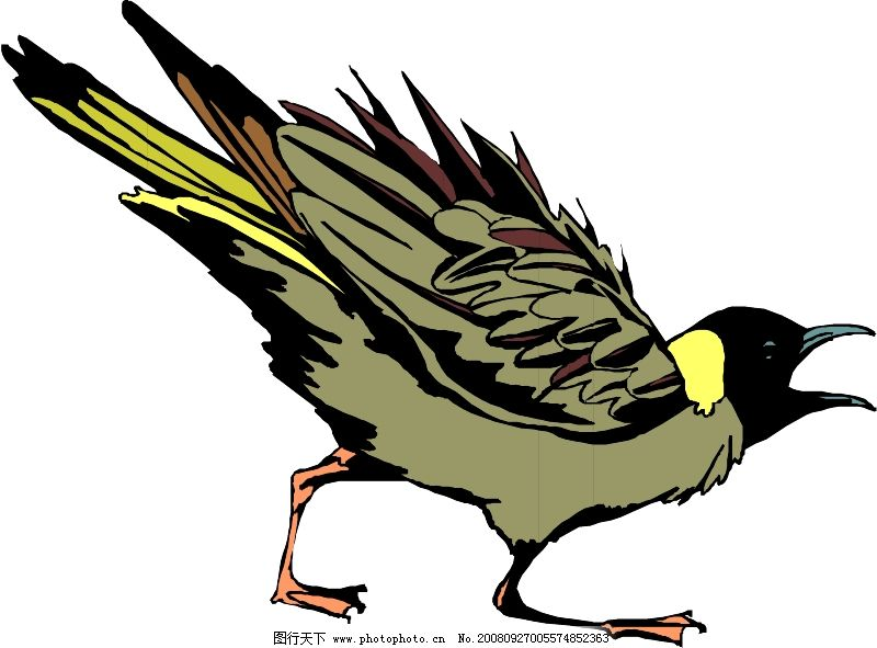 鸟类动物0309